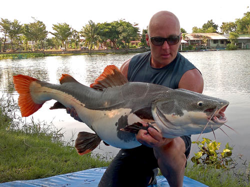 Redtail Catfish from Twin Palm Lagoon.