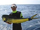 Dorado from the Similan Islands.