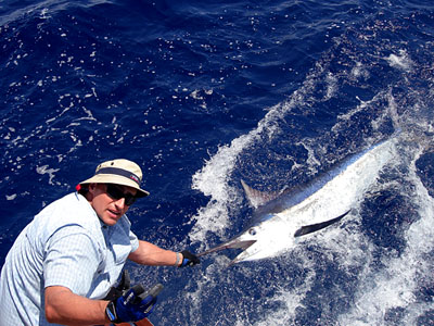 Black Marlin caught near Phuket.